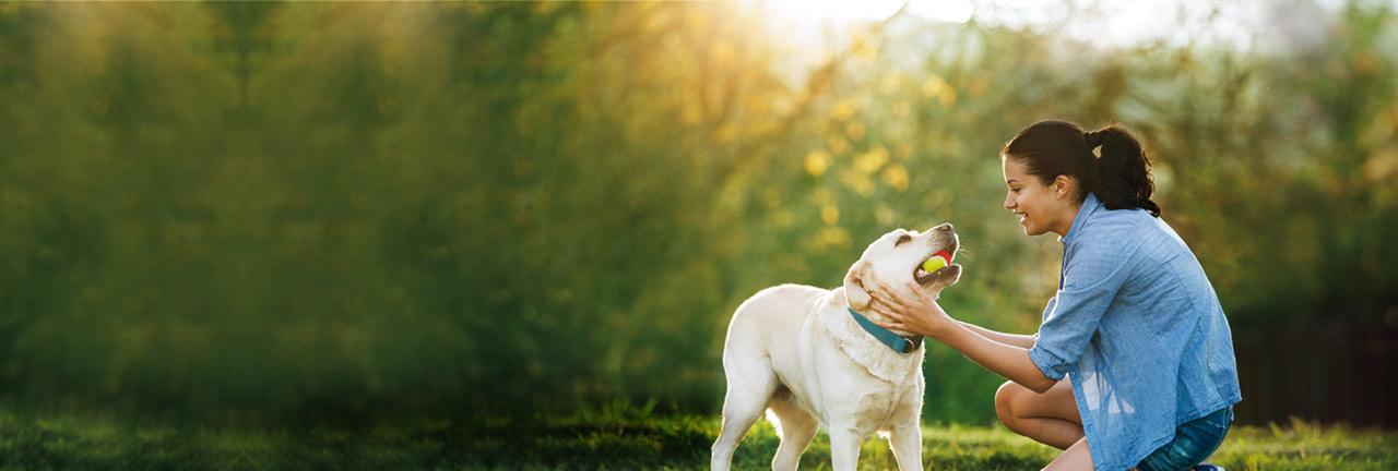 CONVENIA (cefovecin sodium) Injectable Antibiotic for Pet